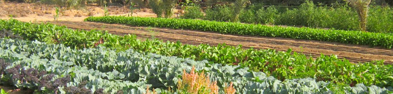 Organic Farming in Dubai, Abu Dhabi, UAE